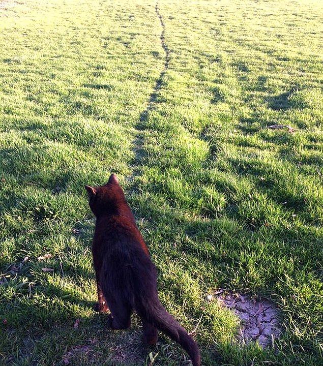 10. Her gün aynı yolu takip eden sevimli kedicik.