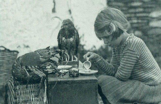 Genç Ann Lockey düzenlediği çay partisinde, konukları ise bebek bir şahin ve ıstakoz, Galler'deki Skokholm adasında, 1938.