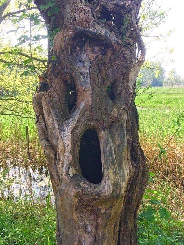 4. Çok korkunç bir ağaç bu!