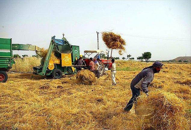İki ülke arasındaki tarım alışverişinin hacmi 75 milyon dolar