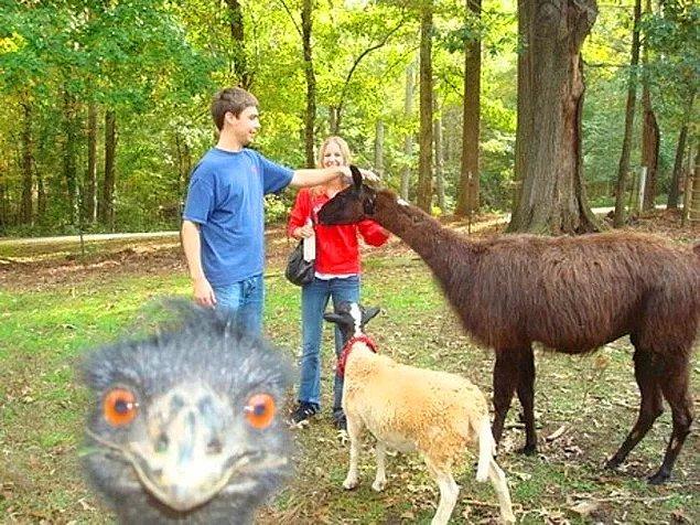 Hayvanından en ünlüsüne kadar fotoğraflara bir şekilde dahil olmak artık herkesin yaptığı bir şey...
