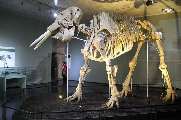 26. Kahramanmaraş Müzesi