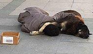 Sokak Ortasında Köpeğe Sarılarak Uyuyan Gencin Yürekleri Sızlatan Görüntüsü