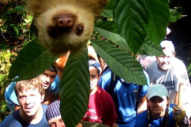 2. Bu tembel hayvan selfieyi ne güzel photobomblamış!