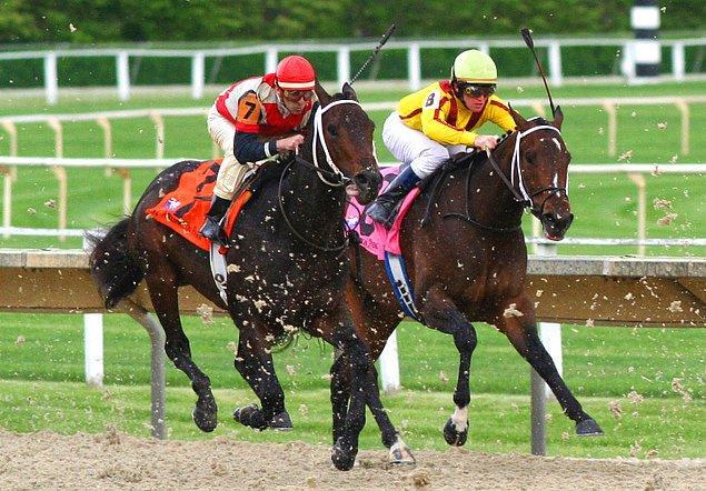 Soru: Yaşlı bir adam ölür ve mirası için oğullarına bir görev bırakır. Buna göre bir at yarışı yapacaklardır ve yarışın sonunda yavaş ata sahip olan mirası kazanacaktır. Yarışırlar fakat ikisi de atı yavaş sürüp durdurduğu için yarış bitmez. Bu yüzden yaşlı bir bilgeye danışırlar. Bilge onlara bir tavsiye verir. Bunun üzerine kardeşler dört nala yarışırlar. Yaşlı bilgenin tavsiyesi nedir?