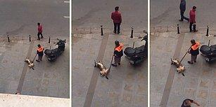 Yerde Yatan Köpeği Süpürgesiyle Mutlu Eden Temizlik İşçisi