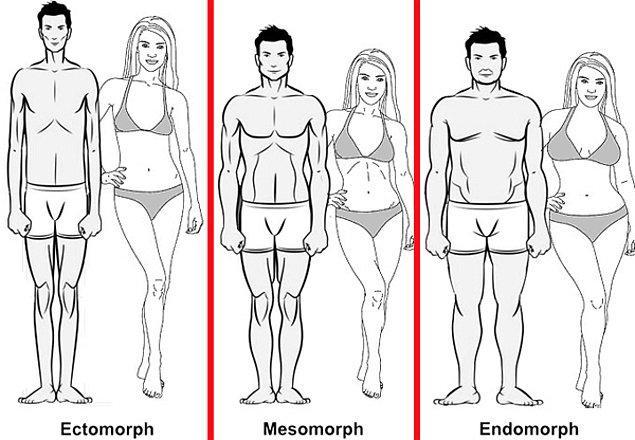 Vücut için belirlenmiş üç tip bulunuyor.