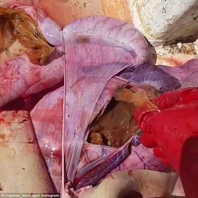 Bir balıkçı Avustralya'da yakaladığı köpek balığının midesinden çıkanlar karşısında şok oldu! Siz de olacaksınız!