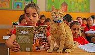 Okuldan 'Uzaklaştırılması' 24 Ülkede Haber Olmuştu: Öğrencilerin Sevgilisi 'Tombi' Artık Bir Kitap Kahramanı 🐱