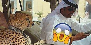 Bunlar Nasıl Kafalar! Dubai'de Yaşıyor Olsaydınız Her Gün Karşılaşabileceğiniz 27 Manzara