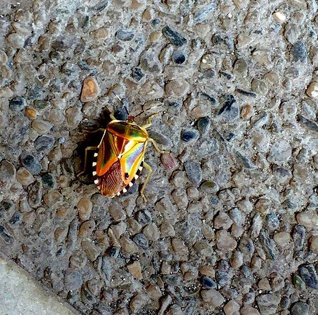 22. Otoparkta bulunan bir böcek.