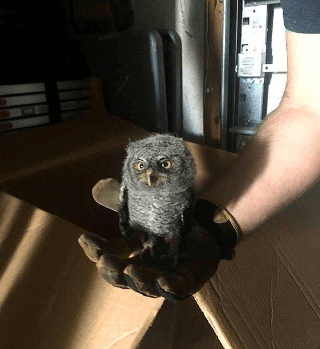 26. Evin garajında bulunan bu dünya tatlısı hayvan.