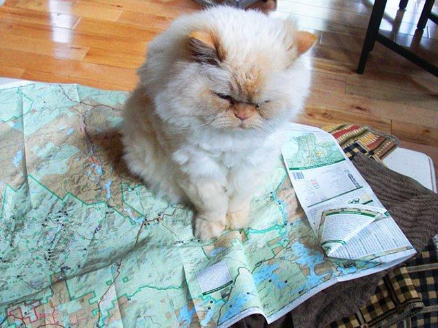 10. Kedilerin kendi navigasyon sistemleri vardır.