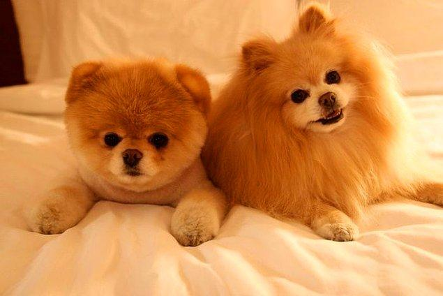 Yine sosyal medya, sevimli hayvan fotoğraf ve videoları pek çok insanın hayvan sevgisini baştan şekillendirdi.