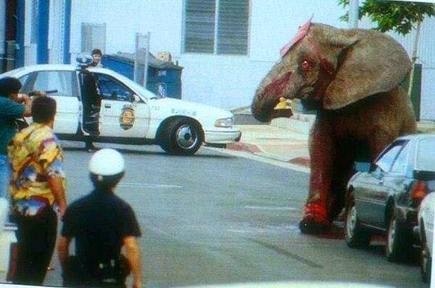 1994 yılında Hawaii'de bulunan bir fil, sirk gösterisi sırasında sirkten kaçmayı başarmıştır. Aslında buraya kadar her şey normal gözükse de acıklı durum daha sonra yaşanmıştır. Hawaii polisi, onu öldürmek için 86 kez ona ateş etmiştir. Ne kötüdür ki yüreklerimizi parçalayan durum ise, filin gözlerindeki korku olmuştur.
