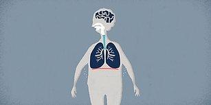 Akciğerler Ne İşe Yarar?