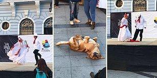 Patisinden Geldiğince Bir Şeyler Yaparak Dans Eden İnsanlara Eşlik Etmeye Çalışan Köpek
