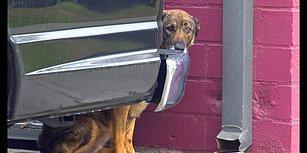 Sokakta Ağlarken Bulunup Kurtarılan Köpeğin, Kısa Sürede Geçirdiği Muhteşem Değişim İçinizi Isıtacak!