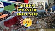 Su Kirliliği Aldı Başını Gidiyor! Yuttuğu Plastik Poşetler Yüzünden Ölen Balina