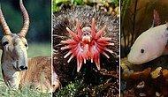 Dış Görünüşleri ile Gören Herkesi Anında Şaşkına Çevirecek 17 Tuhaf Hayvan