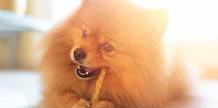 Köpeğinizin Tüyleri Aslında Size Çok Şey Anlatıyor! 10 Maddede Köpeğinizi Sağlıklı Tüylere Kavuşturma Rehberi