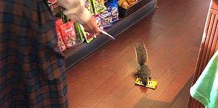 Marketteki Fıstıklı Şekerlemeleri Çalıp Kayıplara Karışan Sevimli Hırsız