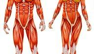 Bu Anatomi Testinde 20'de 15 Yapanlar Tıp Fakültesine Kayıt Yaptırabilir!