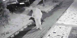 Ne Zaman Önlem Alınacak? Kadıköy'de Köpeğe Tecavüz Suçunu İtiraf Eden Şahsı, Mahkeme Serbest Bıraktı