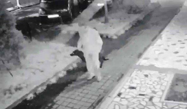 Bugün üzücü bir haber de Kadıköy'den geldi. Caferağa'da mahallenin beslediği iki yaşındaki 'Gece' isimli köpek, kafasına kemer geçirilerek zorla götürüldü.