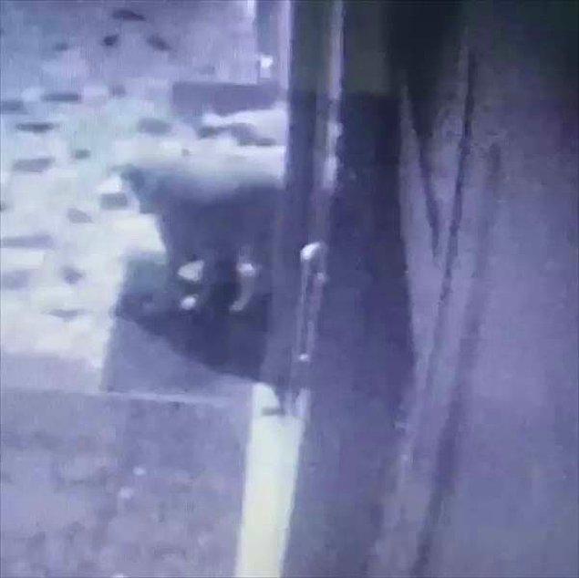 Saldırganın kimliği olaydan bir hafta sonra tespit edildi.