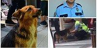 Elleriyle Sokak Köpeğine Su İçiren Polis Memuru Seyit Kurtulmuş: 'Herkes Benim Yaptığımı Yapar'