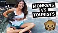 İnsanlara Karşı Sürekli Olarak Saldırı Modunda Olan Maymunların Efsane Görüntüleri