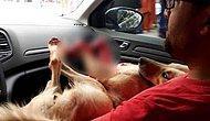 İnsan Yok Etmeye Devam Ediyor: Kocaeli'de Bir Müezzin, Köpeği Tüfekle Vurarak Öldürdü...