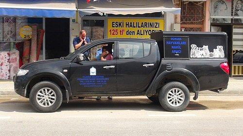 Adanada dört ayağı kesilmiş kedi bulundu 79