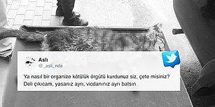 Katili Aramızda: Bursa'da Dört Ayağı Kesilmiş Ölü Kedi Yavrusu Bulundu
