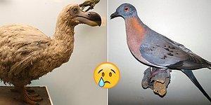Onları Bir Daha Hiç Göremeyeceğiz! İşte Nesilleri Tamamen Tükenmiş 19 Hayvan