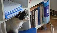 🐾Makam Odasında Pati İzleri: Hayvan Dostu Esenköy Belediyesi'nin Sevimli Misafirleri