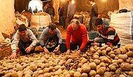 Ekonomi Bakanı Açıkladı: 'Suriye'den Patates İthal Ettik'