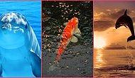 Dünyaya Balık Olarak Gelsen Hangi Balık Olurdun?