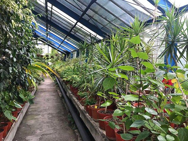 Lisans öğrencilerinin yanı sıra ilkokul ve lise öğrencilerinin de eğitimi için kullanılan bahçede 5 bin bitki bulunuyordu.
