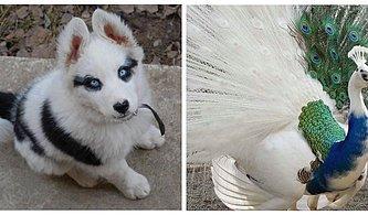 Hayvanlar Aleminin Ne Kadar Sıra Dışı Olduğunu Fark Edeceğiniz Birbirinden İlginç Görüntüler