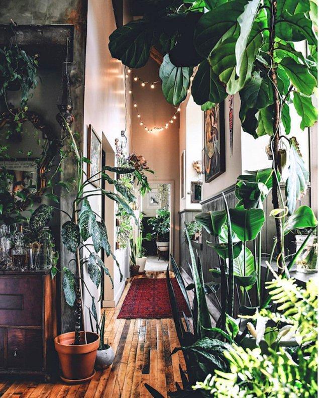 1. Evinde saksı bitkisi yetiştirmeyi sevenlerden misiniz?