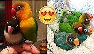 Gülümsetme Garantili Mini Hikâye: Kuş Kiwi ve Metalci Kız Arkadaşının Kıskandıran Aşkı!