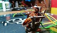 İşkence Suçundan Tutuklandı: Hamam Böceğini Elektrikli Sandalyede İnfaz Eden Heykeltıraş Gabriel Tuazon