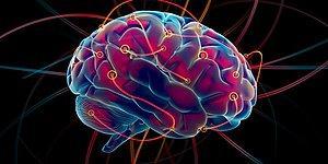Senin Beynin Ne Renk?