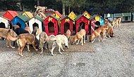 Güzel Şeyler de Oluyor! 700 Köpeğe Ev Sahipliği Yapan Harika Proje: 'Patiliköy'