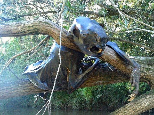 11. Avustralya'da bulunmuş bir ceset. Sizce hangi hayvana ait?