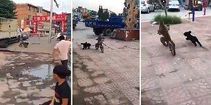 Bisiklet Binen Maymunun Peşini Bırakmayan Köpek