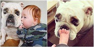 Sevimli Bebek Finley ve En Yakın Arkadaşı Ernie'nin İçinizi Eritecek Dostlukları