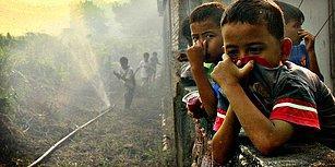 Kirletiyoruz, Öldürüyoruz, Mahvediyoruz! İnsanlardan Daha Çok Nefret Etmenize Neden Olacak 15 Neden